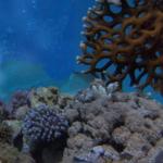 Coral Reef from Pexels.com Qesm Al Wahat